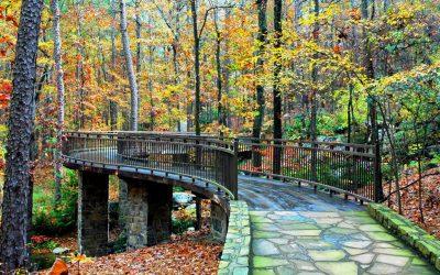 Majestic Park   Garvan Woodland Gardens